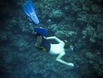 Bus Egypt: Snorkelling in the Red Sea