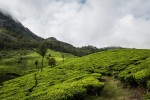 Tea Fields and Backwaters: Kerala in Photos