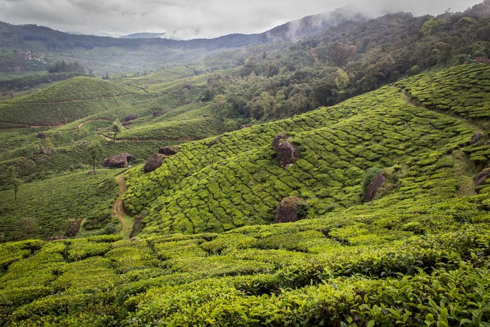 3 - Kerala #02 (IMG_2776)