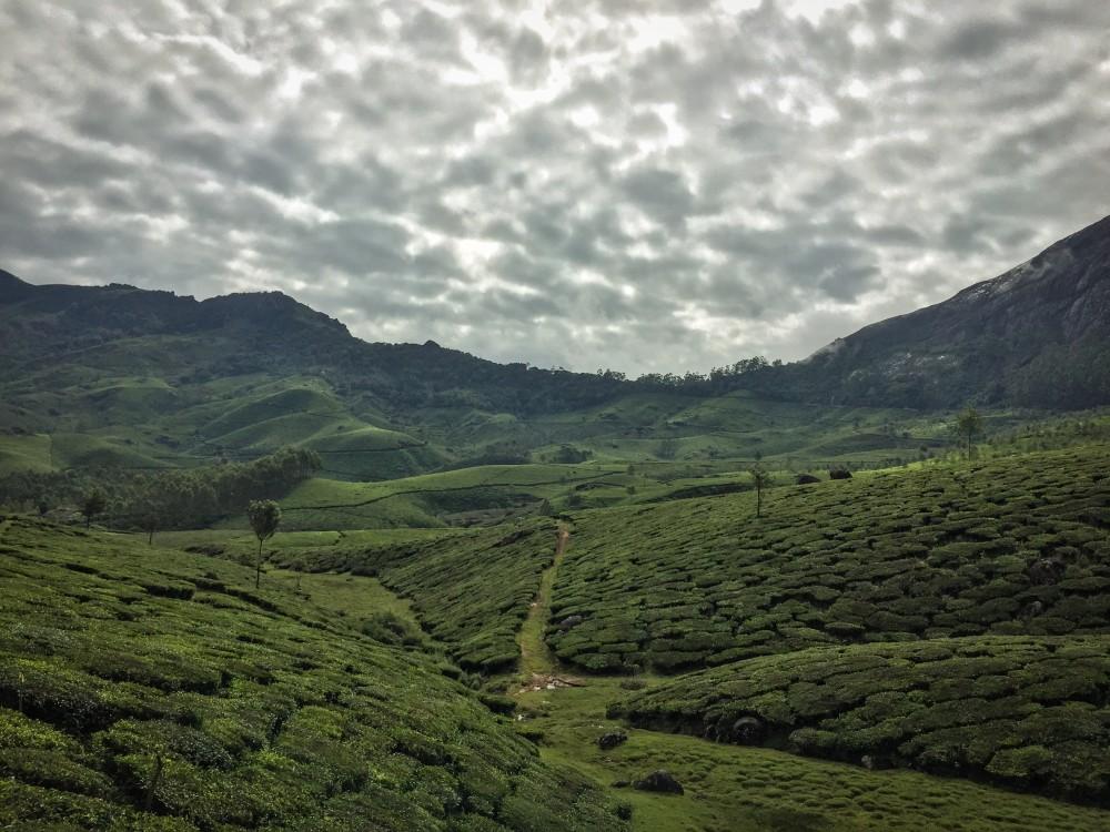 3 - Kerala #05 (IMG_5765)
