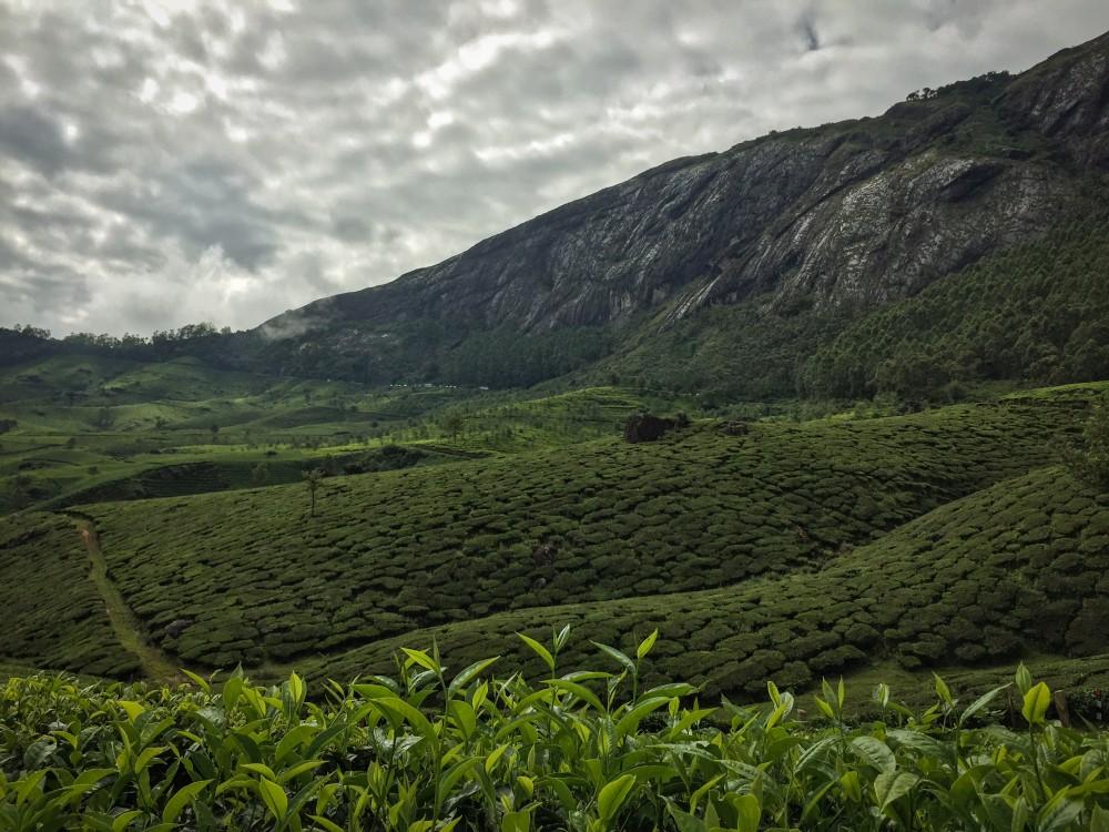 3 - Kerala #06 (IMG_5784)