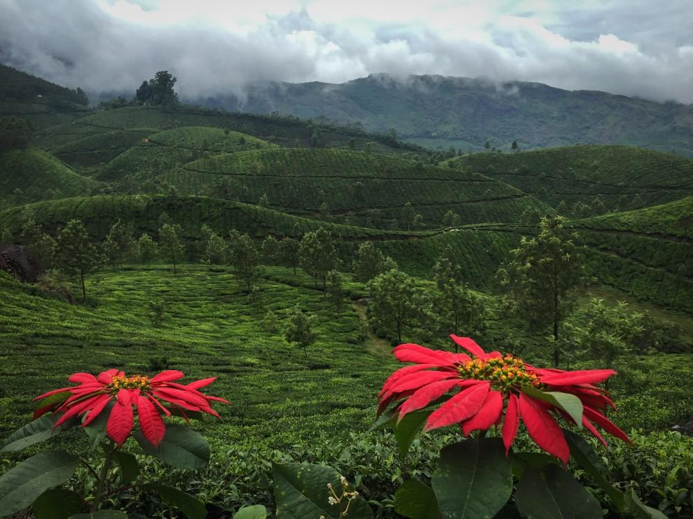 3 - Kerala #09 (IMG_5837)