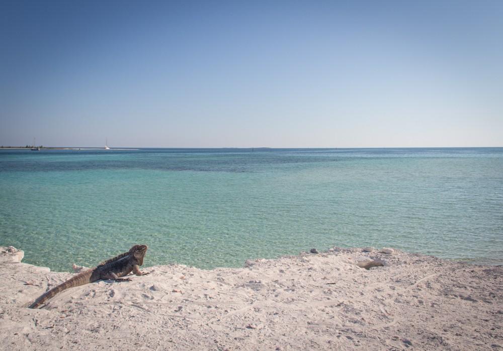 4 - Sailing Cuba #042 (IMG_1547)