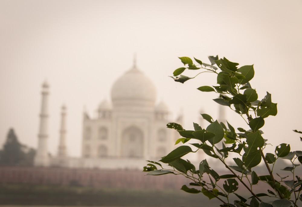 5 - Agra #10 (IMG_3406)